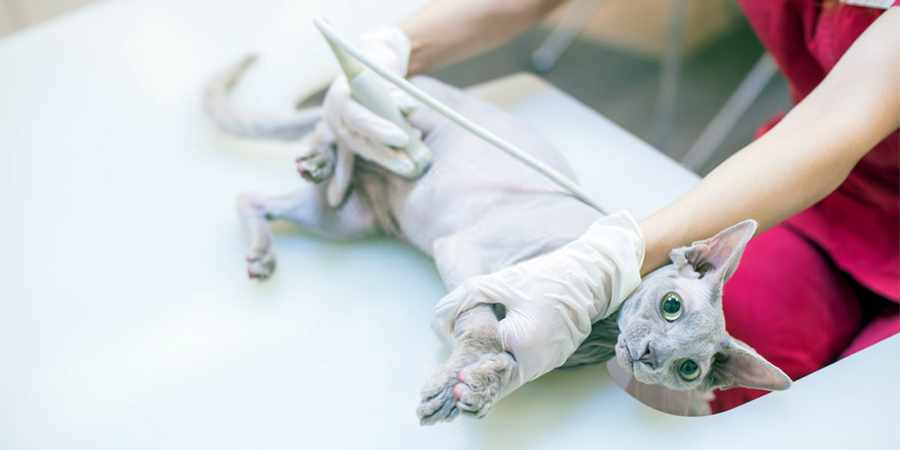 local sphynx  veterenary clinic in Fresno