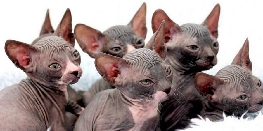 don kittens
