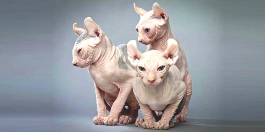 elf kittens