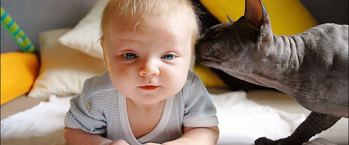sphynx cat and baby